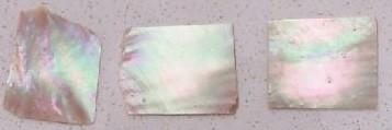 Shell Piece - Greenlip Abalone